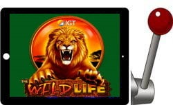 the wlld life free igt slot